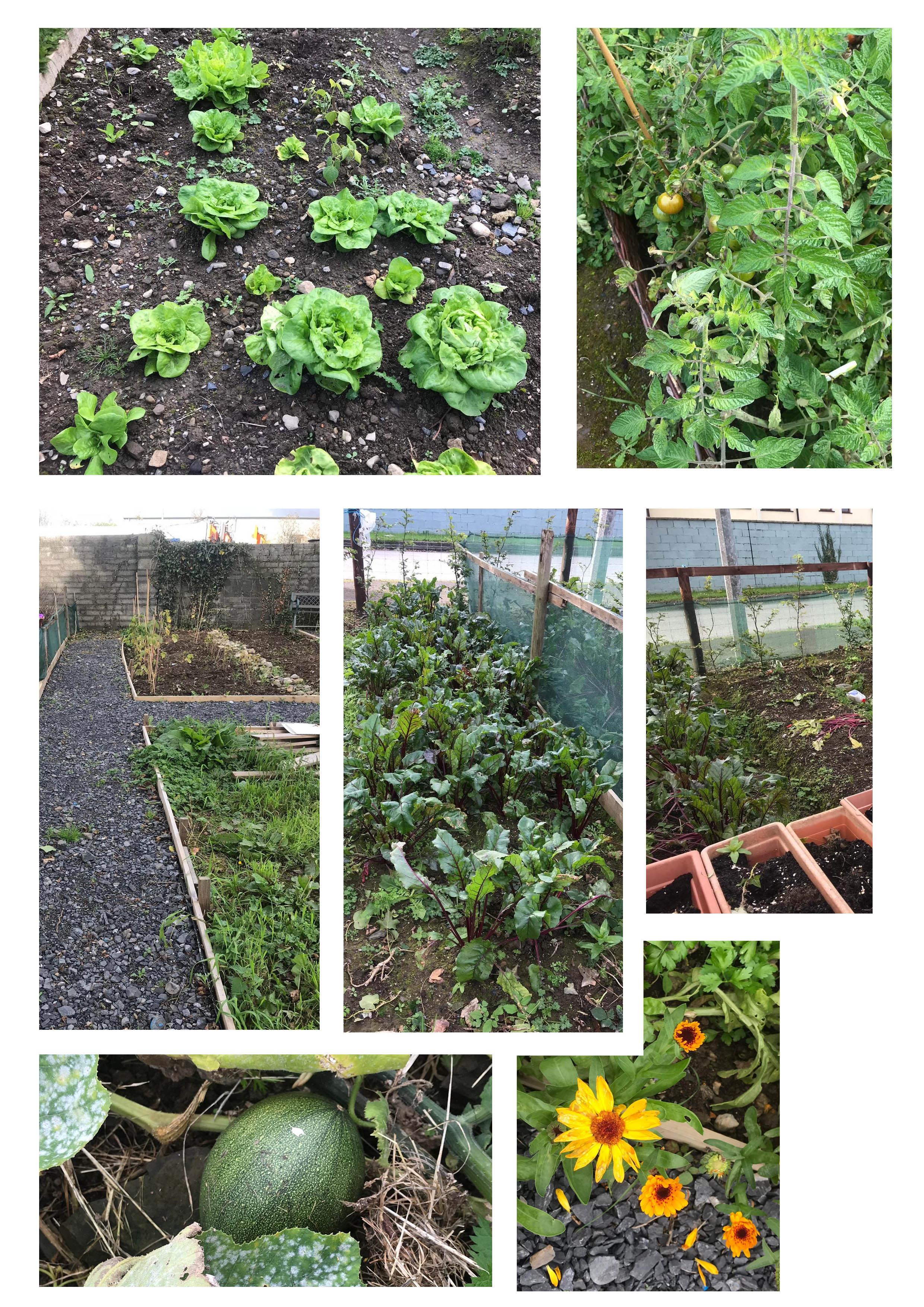 allied garden