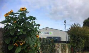 community garden sunflowers 1 300x180 1